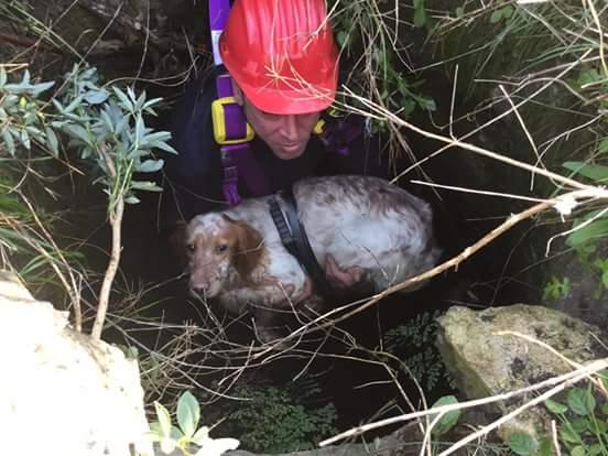 Cane da caccia caduto in un pozzo: salvataggio dei volontari della Misericordia